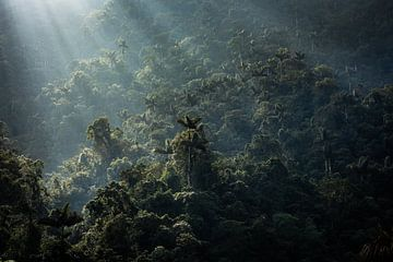 Zonsopkomst boven het oerwoud van de Verloren Stad in Colombia van Floris Heuer