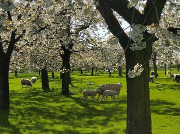 Der Frühling ist ausgebrochen von Ingrid de Vos - Boom