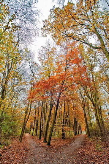 Herfstkleuren in het Bos van Michel Groen