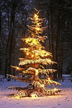 Besneeuwde denneboom in de bossen in Nederland bij avond von Nisangha Masselink