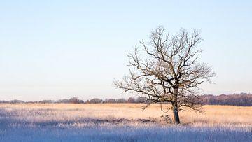 een boom alleen in het veld op een koude morgen van Marc Goldman