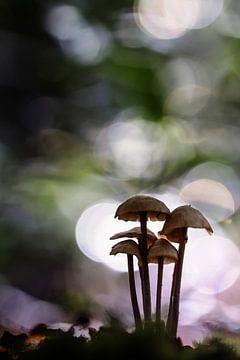 Bright Light van Bob Daalder