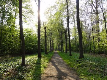 Bospad in de lente von Lotte Veldt