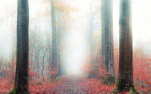 Walking through the mist