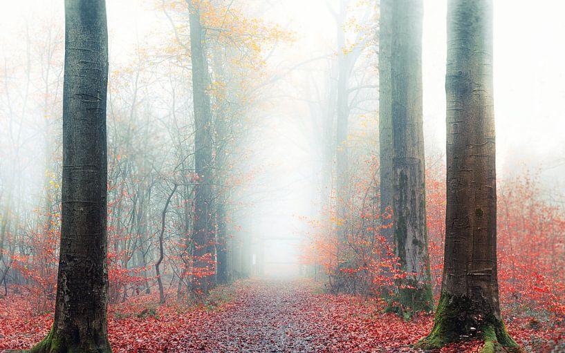 Walking through the mist van Wim van D