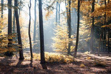Zonnestralen door het herfstbos van Robert de Jong