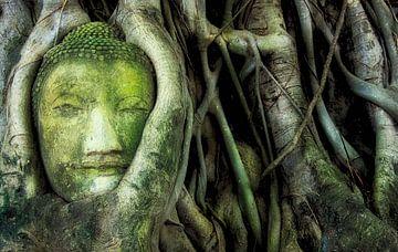 Tête de Bouddha dans un arbre (Thaïlande) sur Giovanni della Primavera