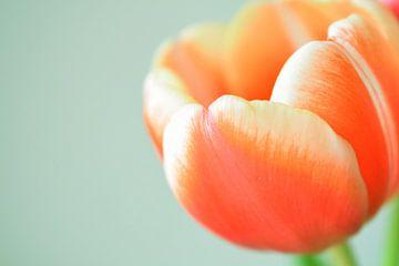 Oranje tulp II von Manon Sloetjes