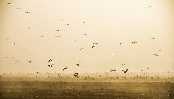 Vogels in de mist van Guus Jamin