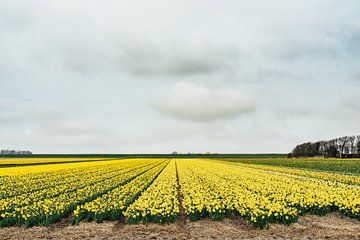 Texel IV van Steven Goovaerts