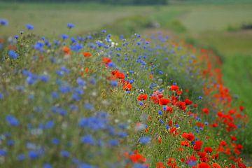 Bloemendijkje op Texel  van Elfriede de Jonge Boeree