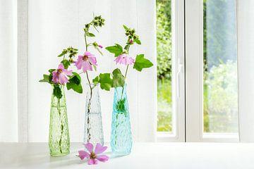 Drei Vasen mit rosa Malvenblüten (Malva) am Fenster vor einem weißen Vorhang, Kopierraum, ausgewählt von Maren Winter