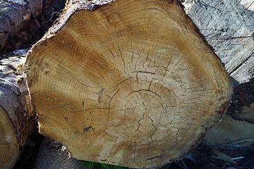 houtblokken die onderweg zijn gekapt in Schotland van Babetts Bildergalerie