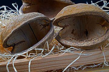 Buddha-Nüsse naturbelassen in einem Kiste mit Holzwolle von Babetts Bildergalerie