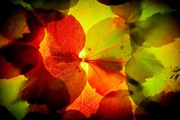 Herfstbladeren 16 van Henk Leijen
