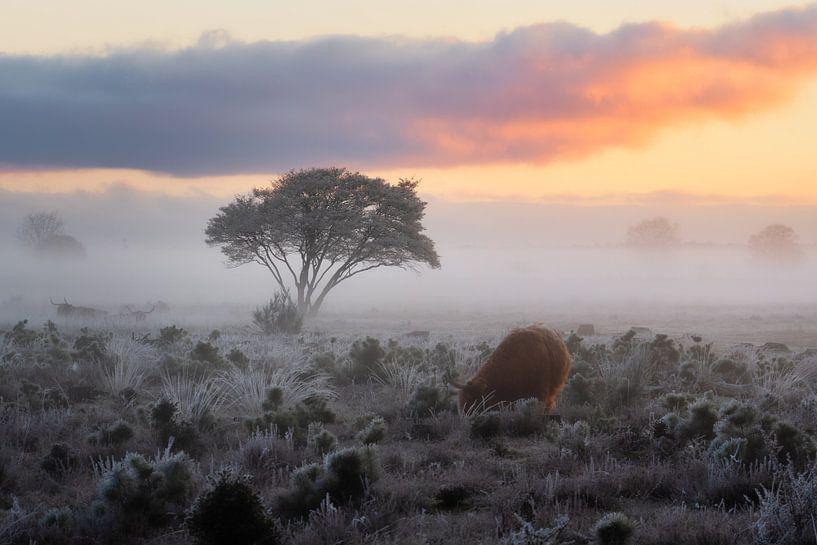 Bevroren Heide van Koen Boelrijk Photography