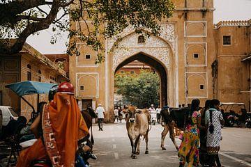 Koe midden op de weg, een typisch straatbeeld in India van Yvette Baur