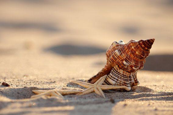 Licht und Schatten Muschel am Strand