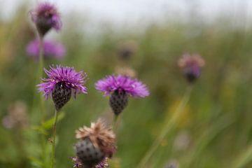 Bloemen van Van Renselaar Fotografie