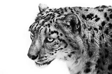 Schwarz und weiß monochrome Leopard schaut vorwurfsvoll, Porträt eines traurigen Tieres weißen Hinte von Michael Semenov
