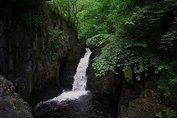 Waterval in een bos van Tom Goldschmeding