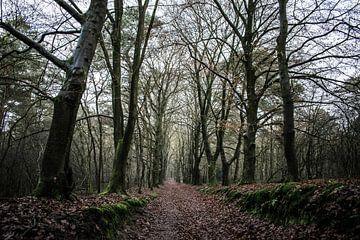 Het duistere bos van Robert Snoek