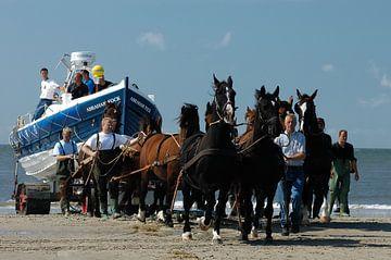 Trek Paarden trekken boot aan land Ameland van Brian Morgan