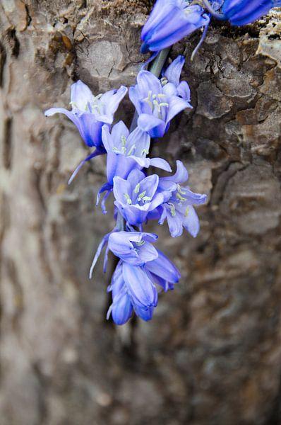 Little blue van Ellinor Creation