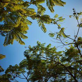 Palmen unter einem blauen Himmel von Michael Moser