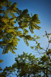 palm trees under a blue sky van