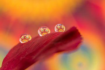Druppels op een bloemblad. van Erik de Rijk