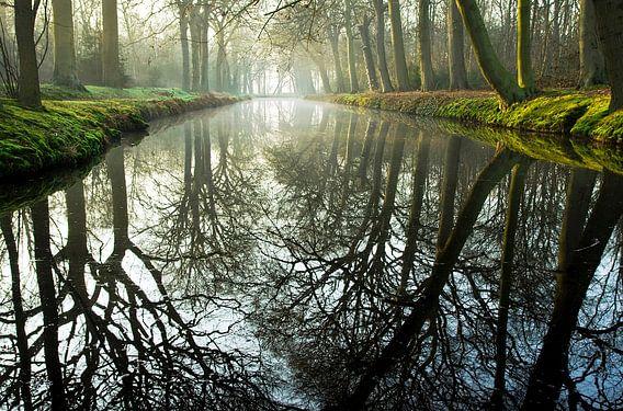 bomen  van Dirk van Egmond