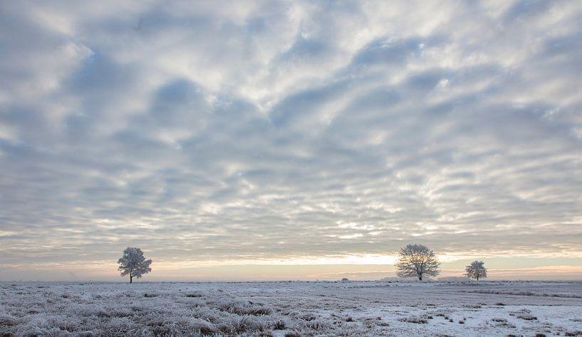Weidse winter van Tony Ruiter