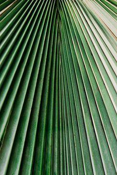 Nahaufnahme des Palmenblattes von Wianda Bongen