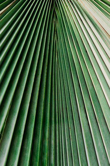 Palm blad close-up