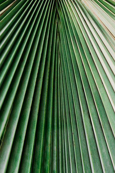 Palm blad close-up van Wianda Bongen
