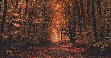 Bos van Roodkapje van Joris Pannemans - Loris Photography