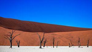 Dodevlei / Deadvlei: versteende bomen voor rode zandduinen