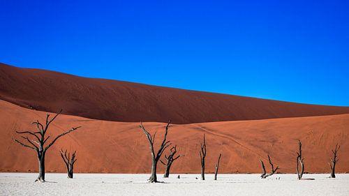 Dodevlei / Deadvlei: versteende bomen voor rode zandduinen van Martijn Smeets