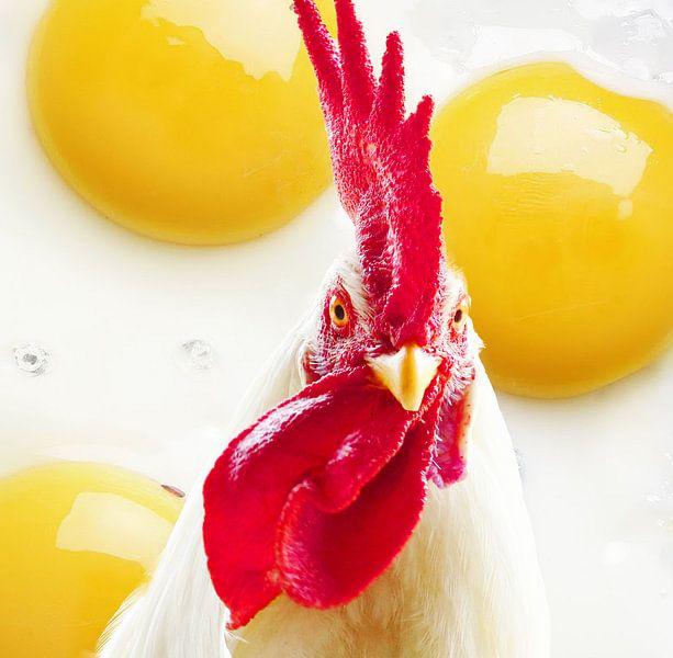 De kip of het ei von Gonnie van Hove