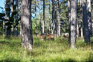 imker in het bos