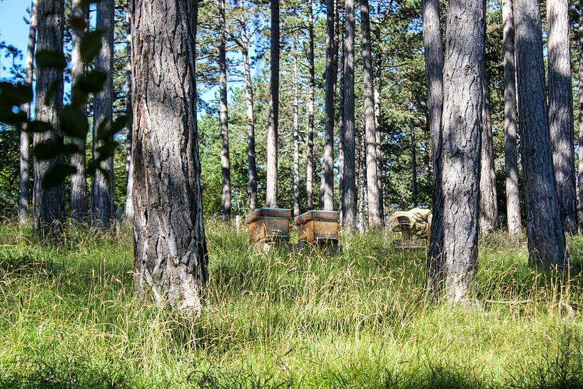 imker in het bos van Erik Koks