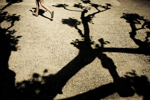 schaduw van een italiaanse boom van Edwin van Laer