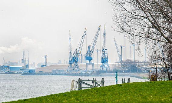 Industrie versus natuur Rotterdam