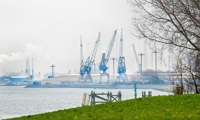 Industrie versus natuur Rotterdam van Anouschka Hendriks