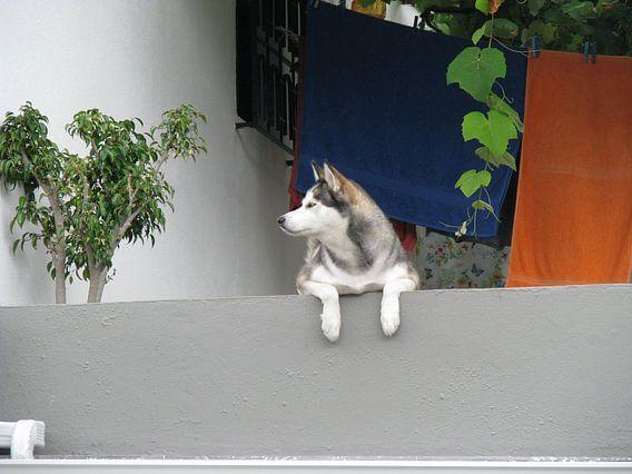 Hond van Henk Rabbers
