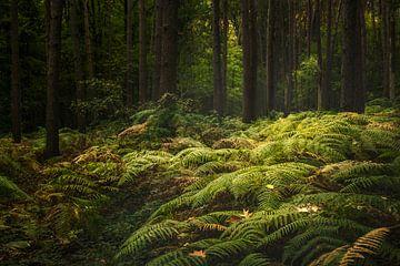 Mysterieus bos van Peter Poppe