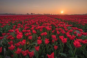Tulpenveld  van Jolanda Wisselo