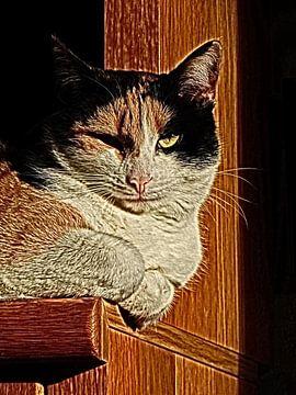 Patches von Katzen von Joke te Grotenhuis