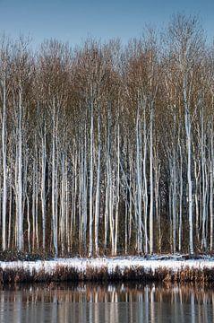 Besneeuwde bomen aan het water van Adri Vollenhouw